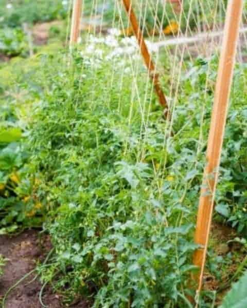 A verticle garden trellis