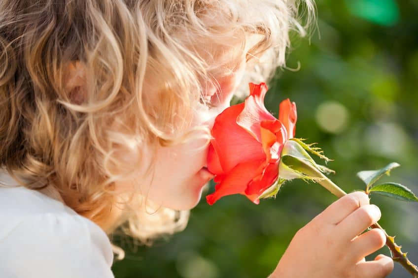 Little girl smelling beautiful flower.