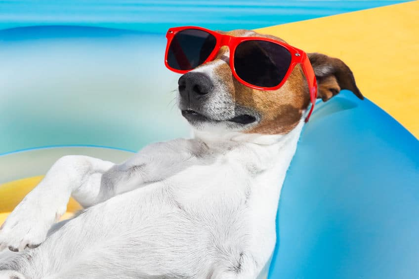 Happy dog with red sunglasses in a swimming pool.