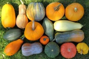 How to Store Different Types of Squash