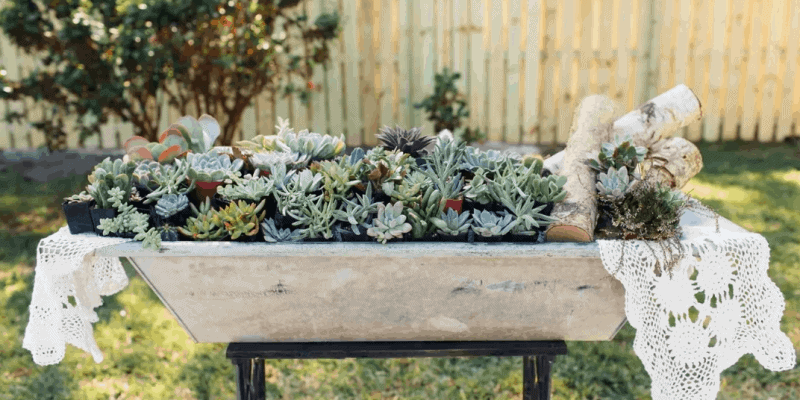 20 Pack of Succulents for Sale $33.49