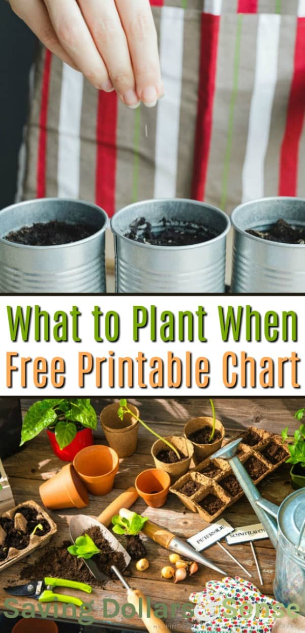 What to plant and when, including a free printable chart.