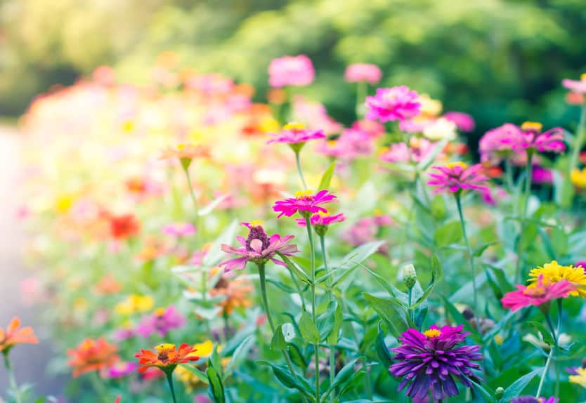 plants to attract bees