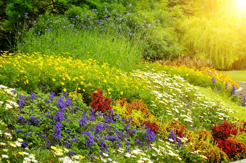 wildflower garden for bees