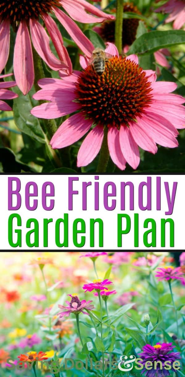 How to Make a Bee Friendly Garden
