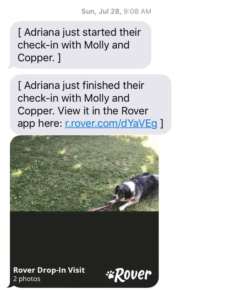 My conversation with a pet sitter from the Rover app. My Completely Honest Rover Pet Sitting App Review