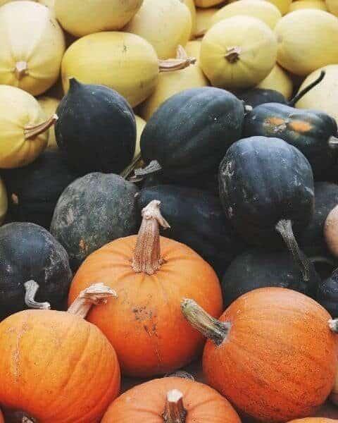 pumpkins, acorn squash and spaghetti squash in a pile