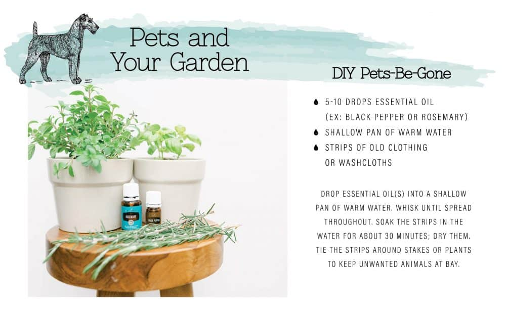 Animal deterrent garden recipe