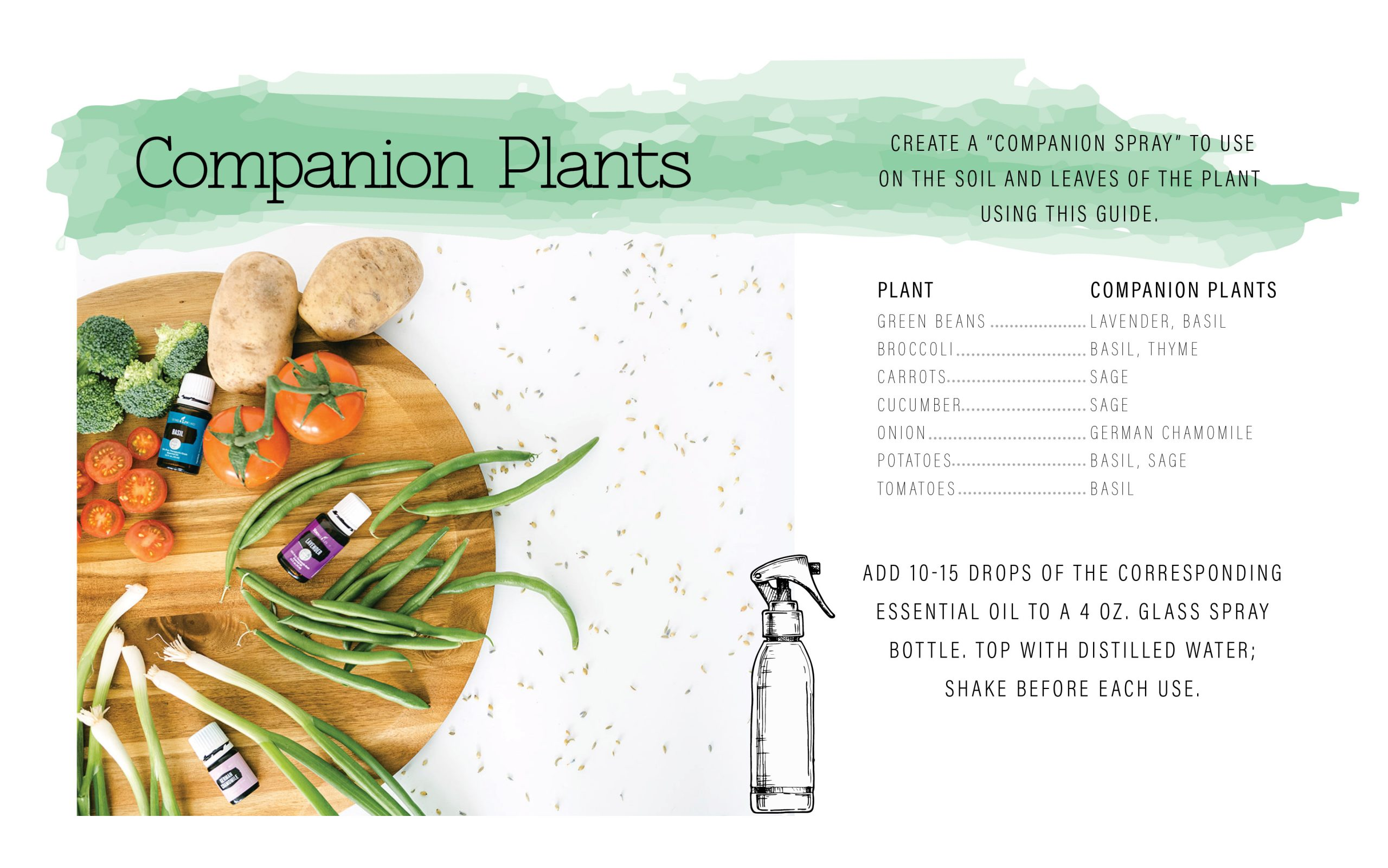 Companion plants. What to plant with each other.