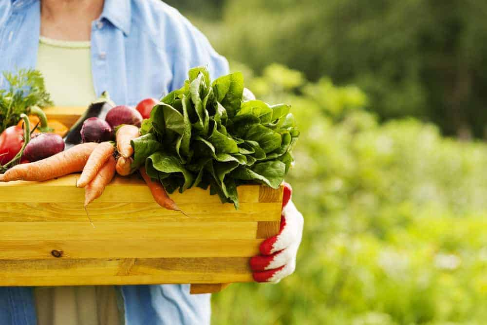 Senior woman holding box with fresh garden vegetables.