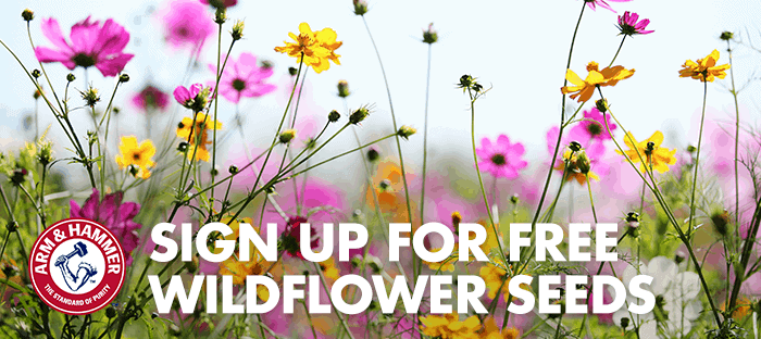 Free wildflower seeds are available for Earth Day to plant.