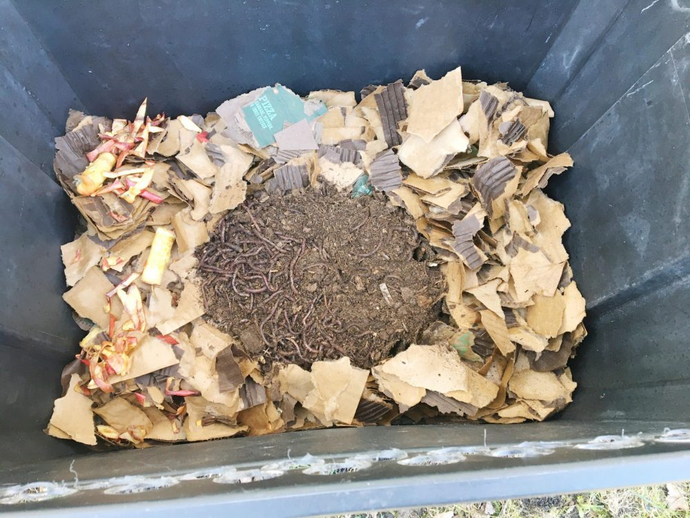 Fill bin with worms.