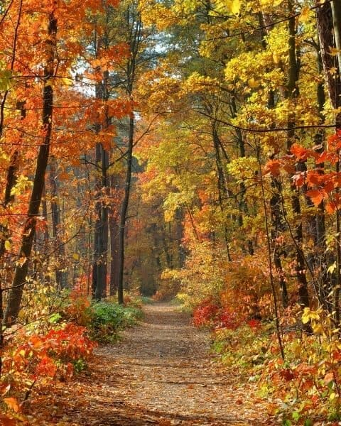 A beautiful forest with leaves changing to fall colors.