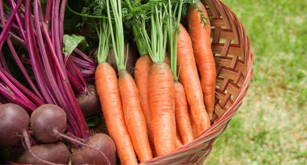 Root vegetables, including carrots and beats.